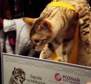 zwyciezca_kot